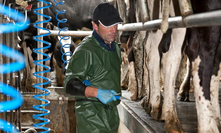 Have you considered once-a-day milking?