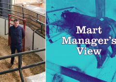 Simmental heifer calves sell up to €360/head at Ballybay Mart