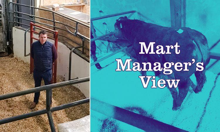 Simmental heifer calves sell up to €360/head at Ballybay Mart