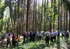 Forest owner groups join forces to form national body