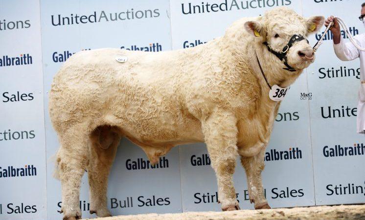 United Auctions postpones Stirling's February sales of pedigree bulls