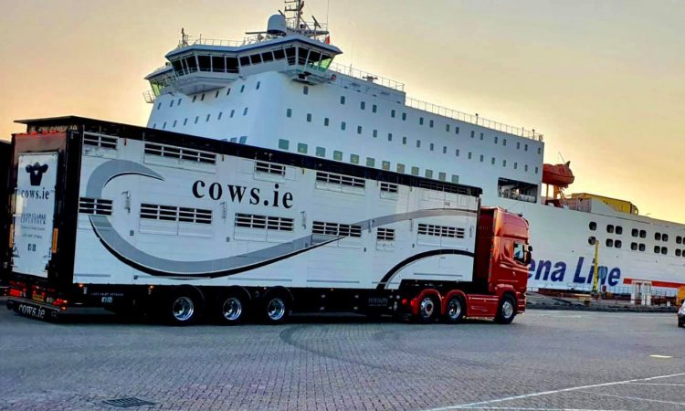 Cattle exporter highlights challenges facing hauliers to a post-Brexit UK