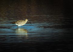 Minister Hackett joins with Minister Noonan in effort to conserve curlew
