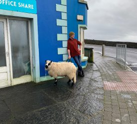 Surfer saves sheep from drowning off Clare cliff