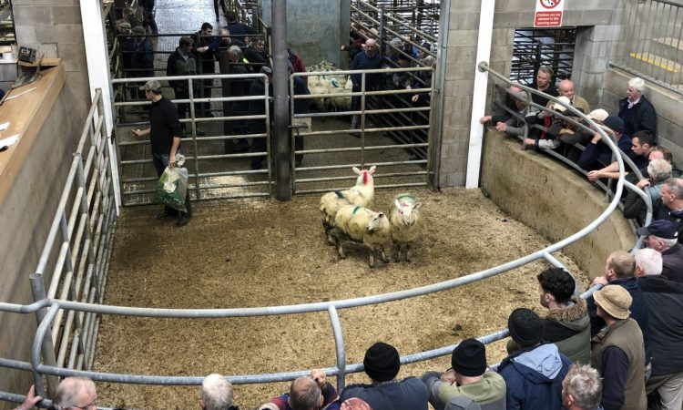 51-55kg lambs sell for €132-139/head at Carnew Mart