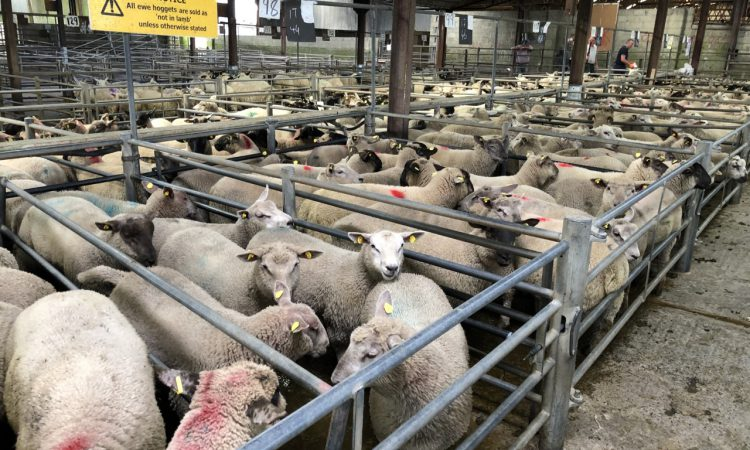'Value of Irish sheepmeat exports increased by 12% to €360 million in 2020'