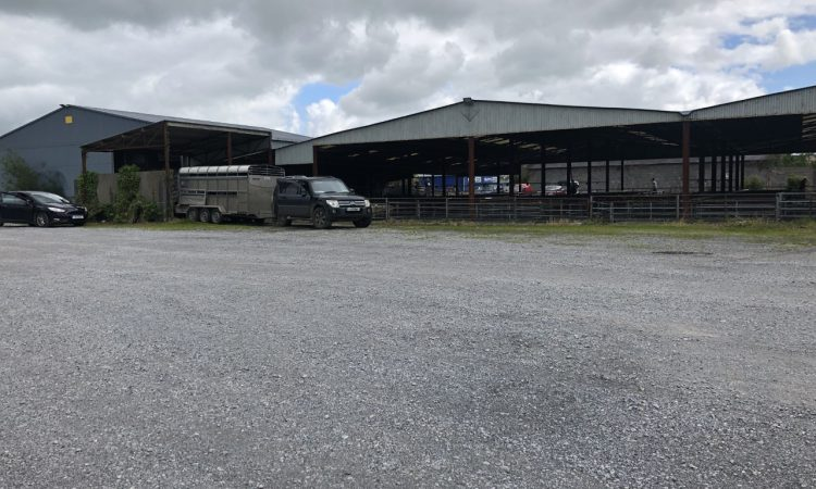 Loughrea Mart postpones sheep sale due to potentially dangerous travel conditions