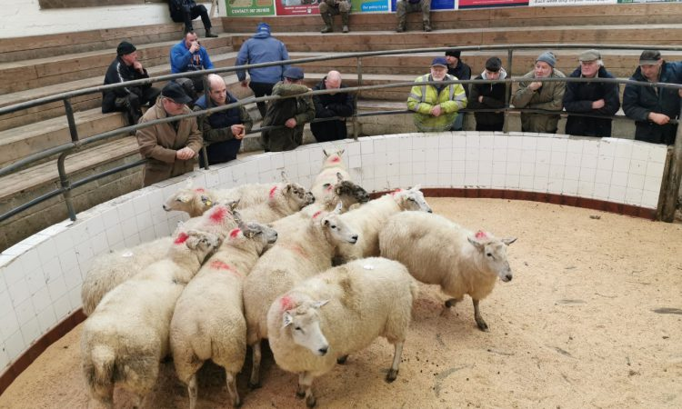 Baltinglass sheep sale postponed; Mountbellew sheep sale going ahead