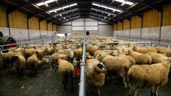 建筑物焦点:一个全新的换衣袜,为300欧元羊群泰隆