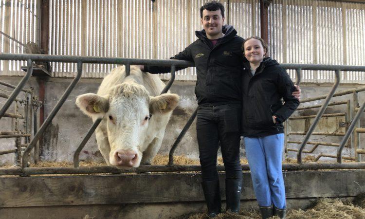 牛肉焦点:Sligo家族在血统繁殖世界中制作波浪