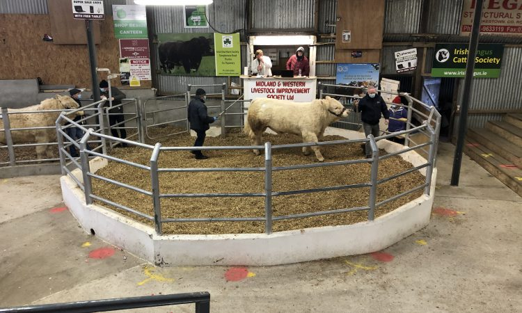 Multi-breed pedigree sale in Carrick-on-Shannon topped at €4,650