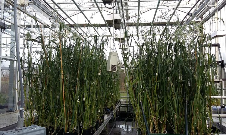 Almost €3m for research project on oats