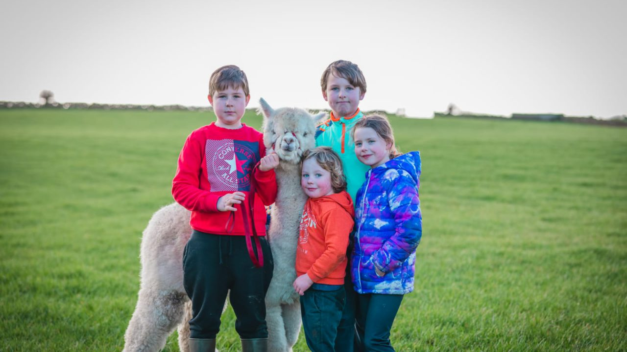 Taughmaconnell family expand alpaca enterprise