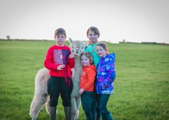 Taughmaconnell family expand alpaca enterprise