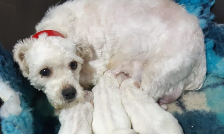 62 dogs surrendered as illegal breeding establishment is discovered in Offaly
