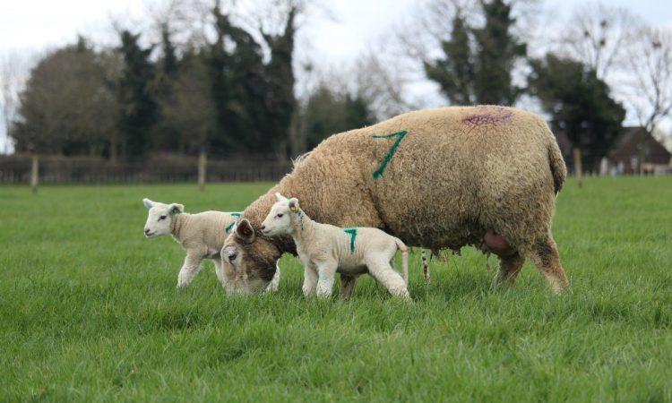'Flock recording will deliver huge benefits'