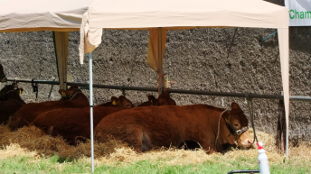 Mullingar Agricultural Show cancels proceedings for 2021