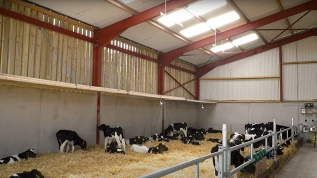 Perfecting conditions within calf housing this spring