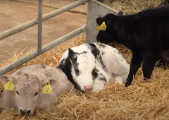 Reducing antibiotic usage by following a herd health plan