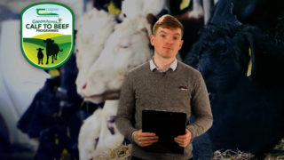The Calf Show – Thursday – Weaning calves and getting them ready for turnout