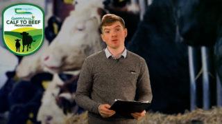 The Calf Show – Tuesday – Calf feeding and maintaining hygiene