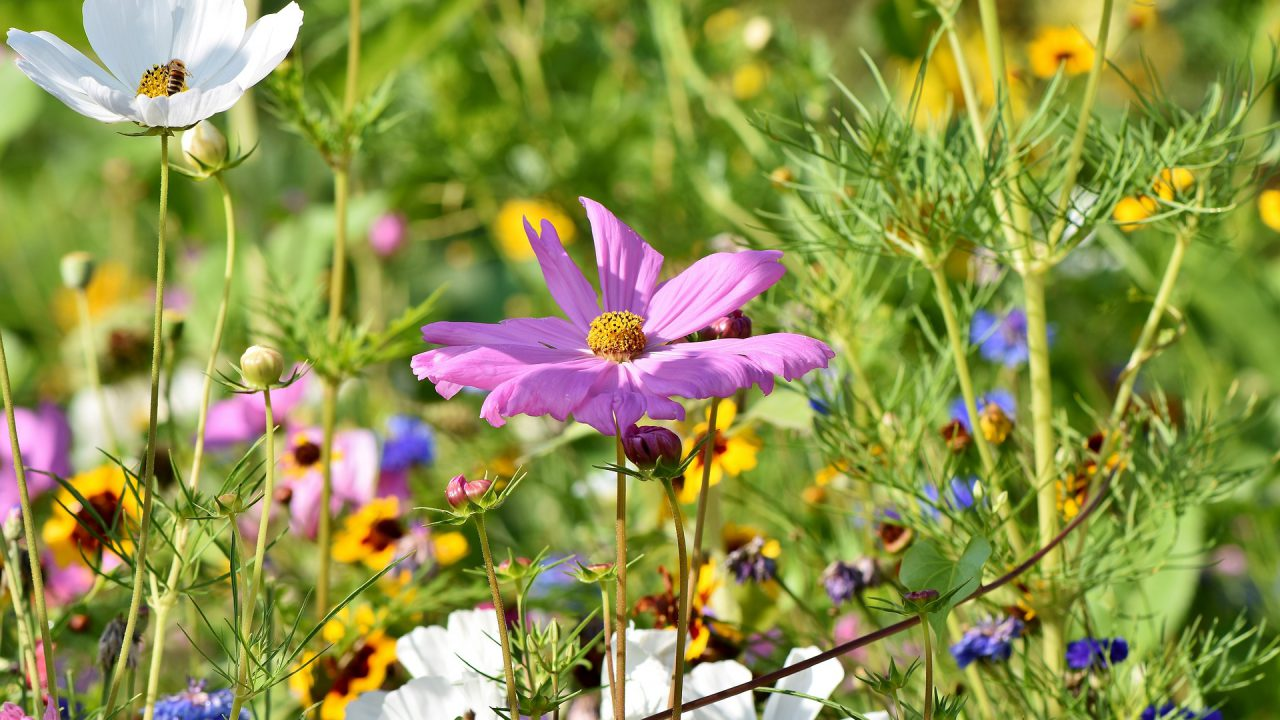 Leading seed company diversifies into wildflower division
