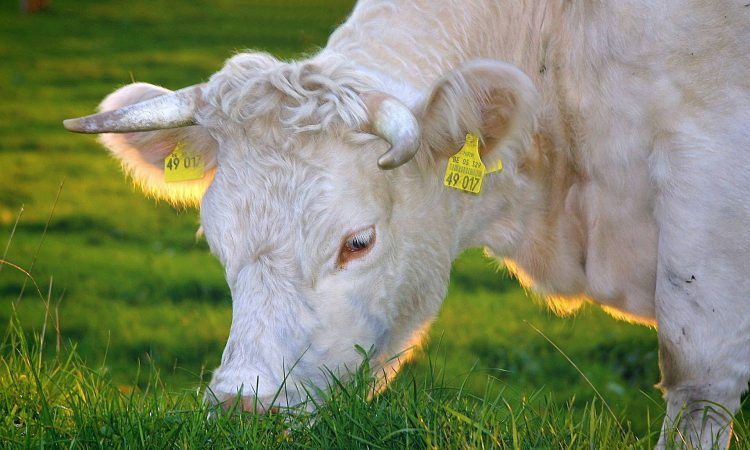 Ireland's first Animal Welfare Strategy launched
