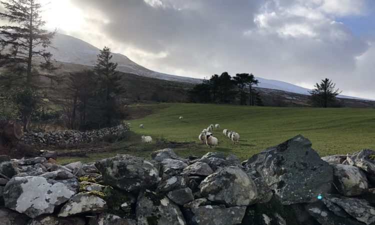 Improving hill flock productivity and profitability in Donegal