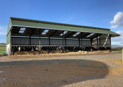 Buildings Focus: New 5-bay slatted unit for an expanding beef finishing enterprise