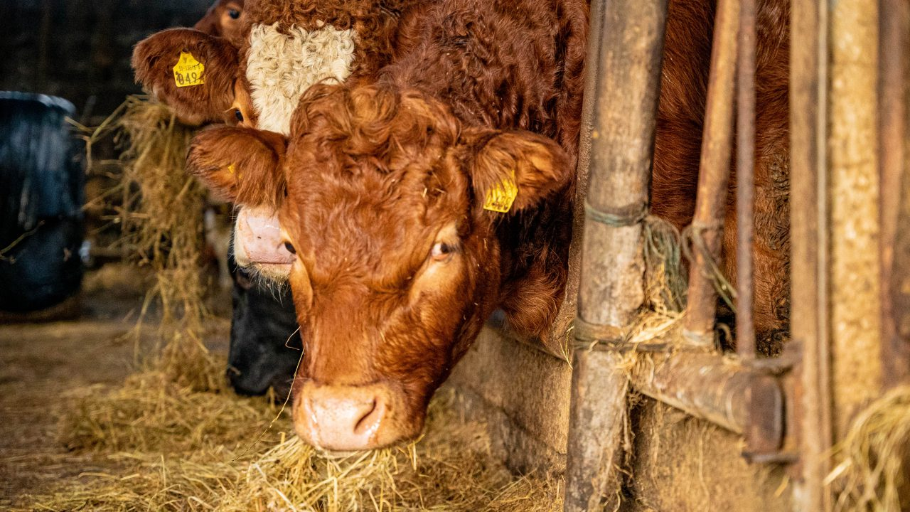Beef trade: Quotes holding steady for the moment