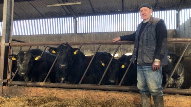牛肉焦点:用传统的Suckler繁殖在Co.Cavan