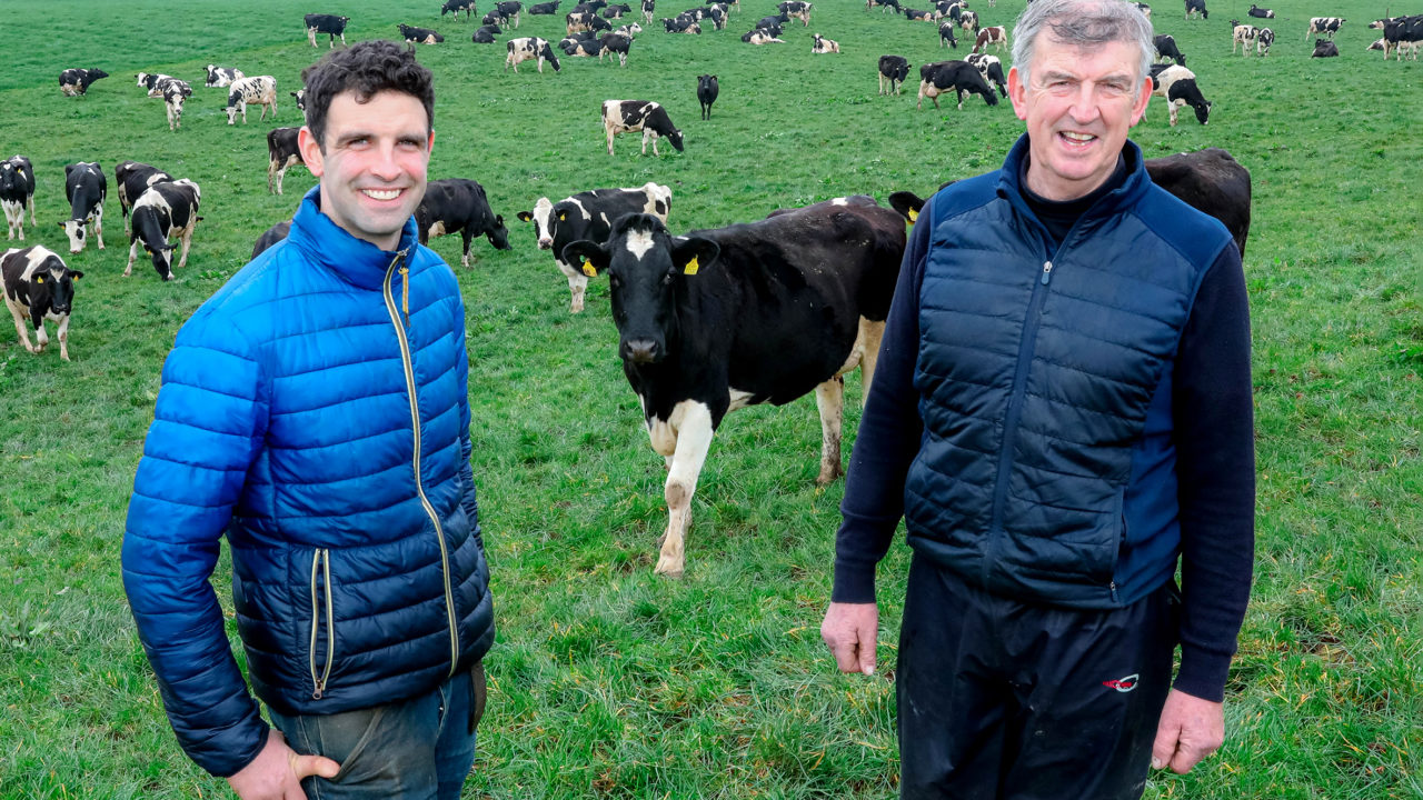 Expanded dairy herd in Co. Kildare results in a move to Hereford sires