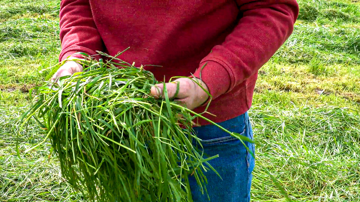 Achieve optimum performance this summer by controlling grassland weeds