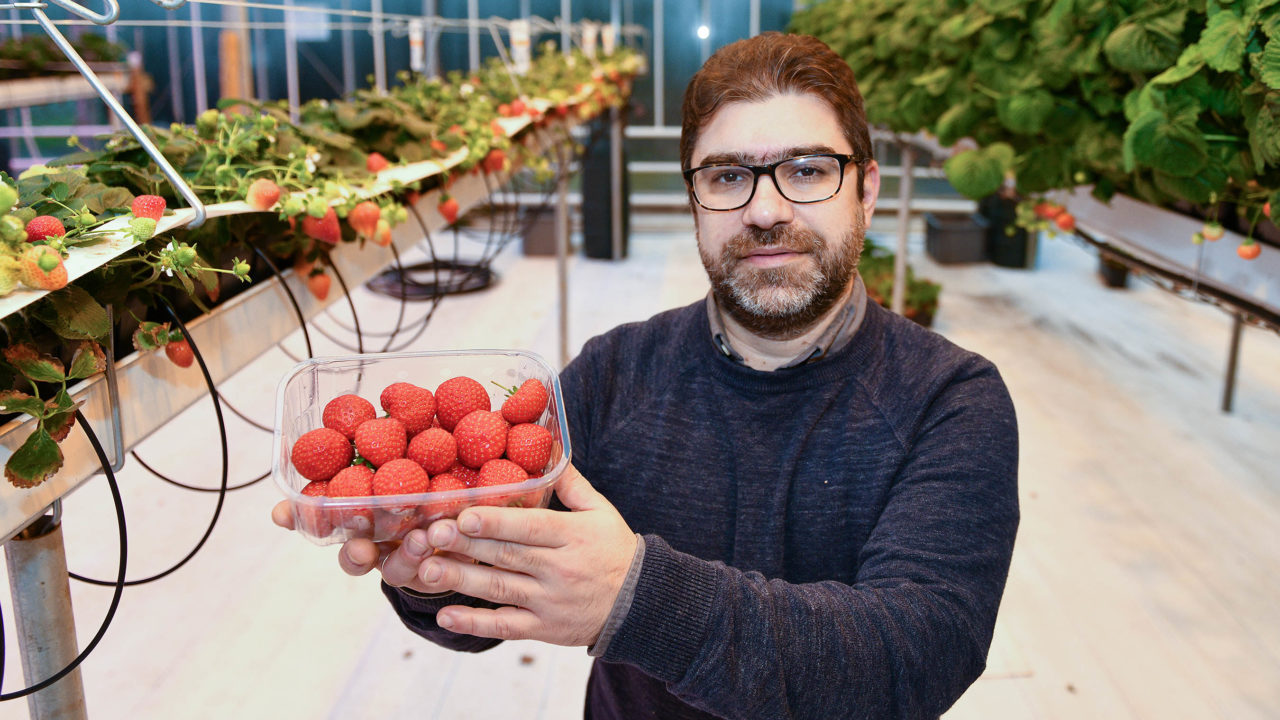 CAFRE to launch NI's first horticulture honours degree course