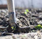 Organic Farming Scheme 'shortcomings' must be addressed