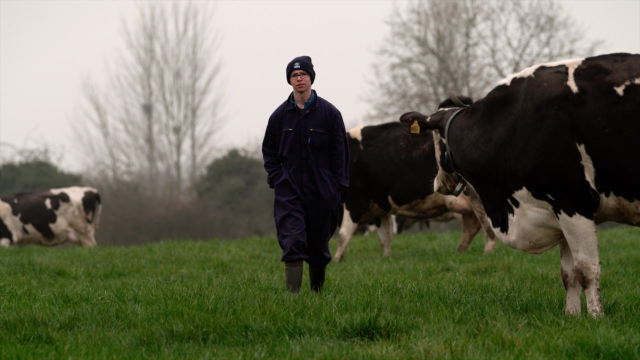 Video: Energy and rehydration post-calving a top priority at Offaly dairy farm