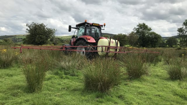 Weed control: Now is the time to consider spraying