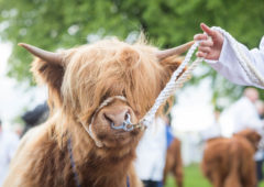 Plans for 'closed doors' showcase as 2021 Highland Show is shelved