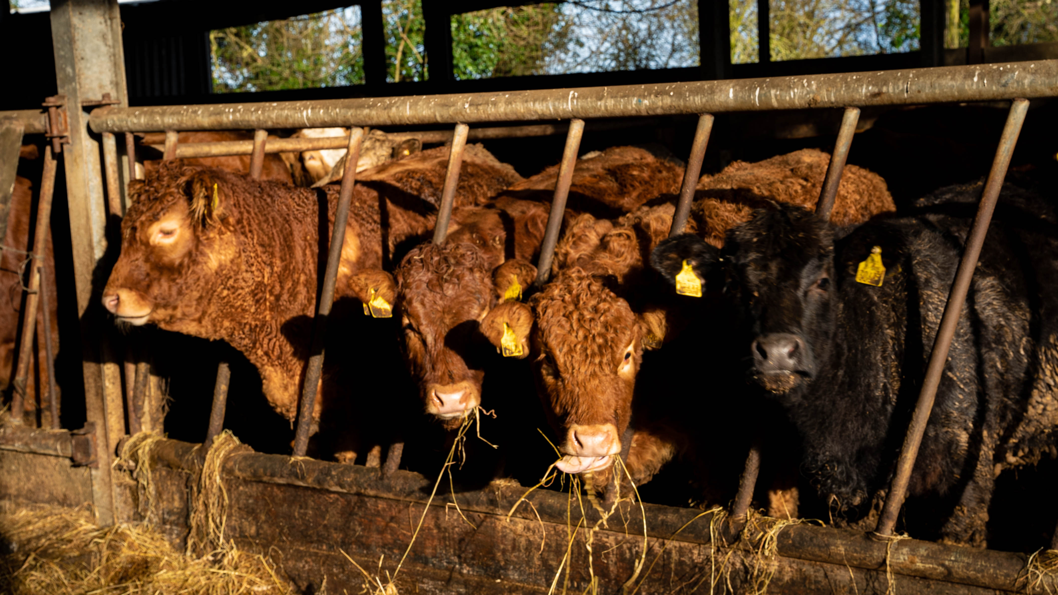 Meeting to be held for beef farmers next week to discuss 'unjustified' prices