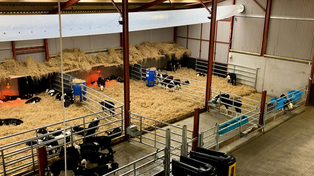 Buildings Focus: Going the extra mile to create an environment for calves to thrive in