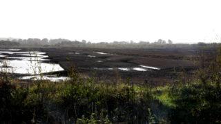 NI泥炭地战略建议为沼泽恢复支付费用
