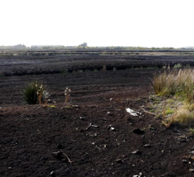 Use of peat as energy source fell by 34% in 2020