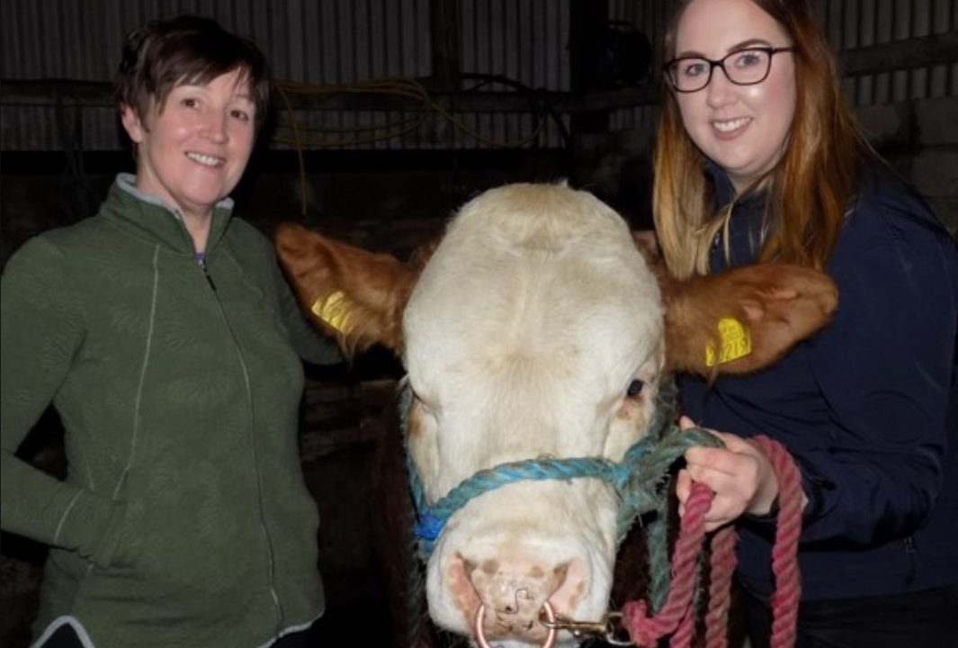 Simmentals take centre-stage for one family this Mother's Day