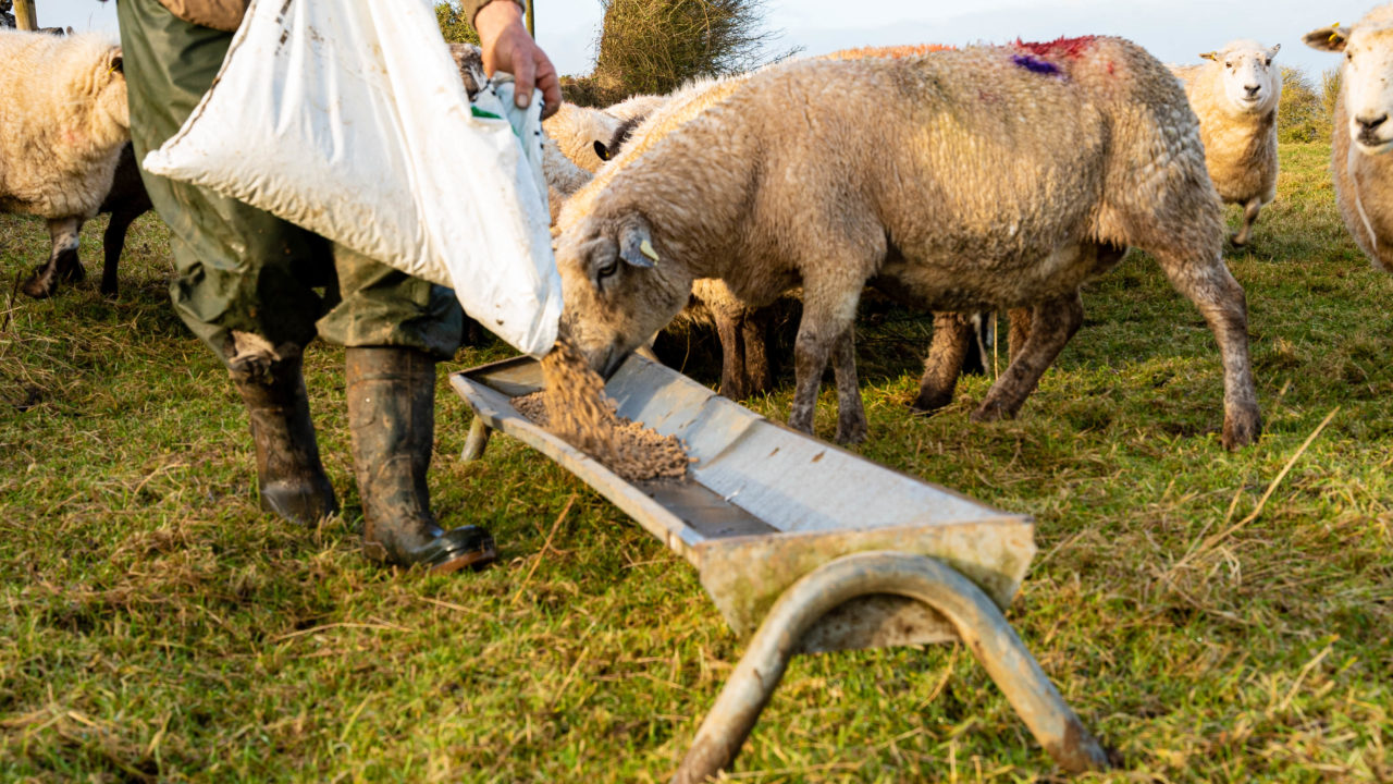 Agricultural consultants call for new evidence to be allowed in Decision of Review process