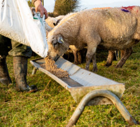 NI total farm income up by a third in 2020