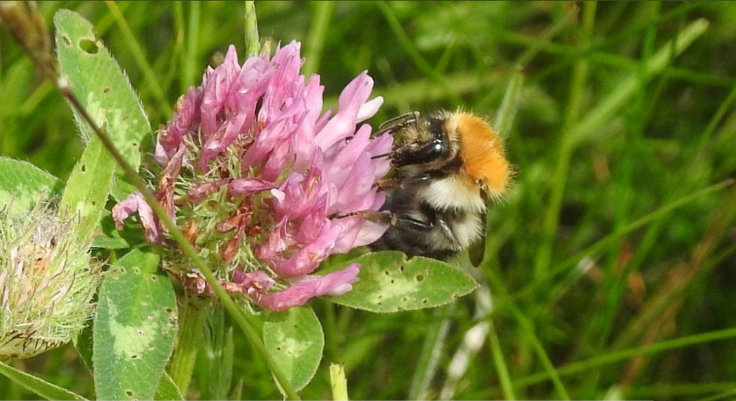 'Stronger, more ambitious' All-Ireland Pollinator Plan unveiled