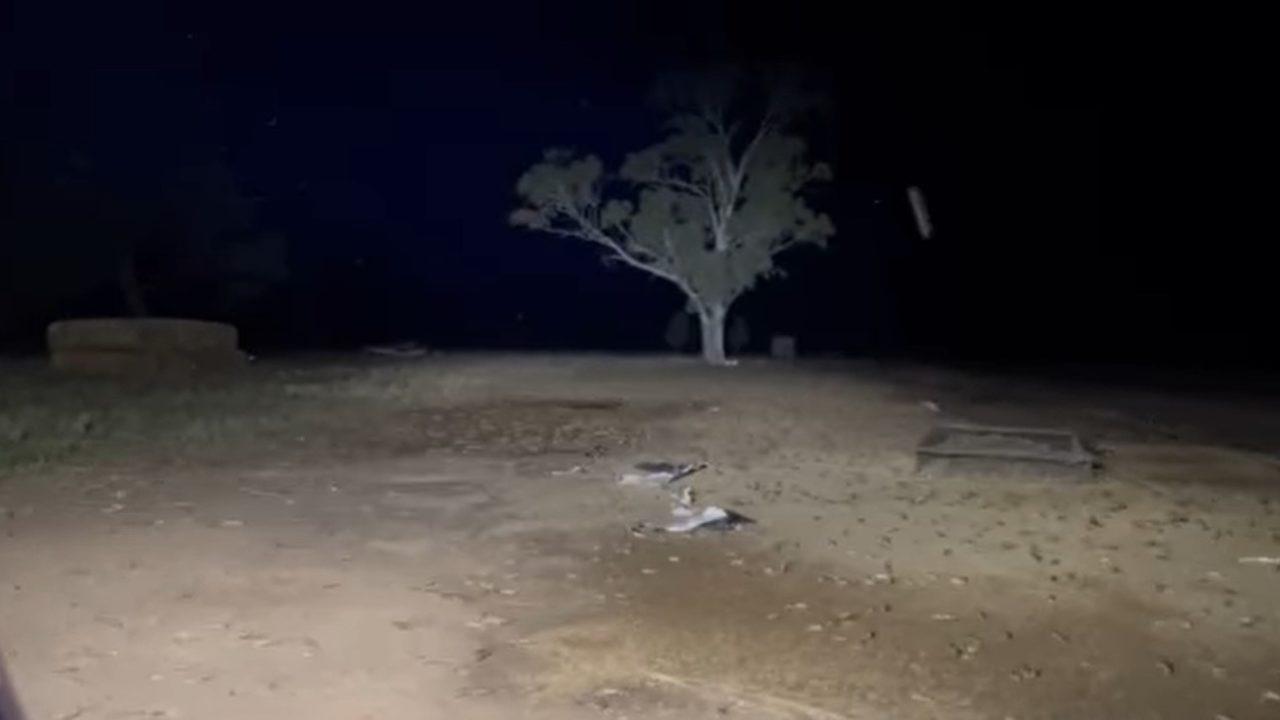 Video: Aussie farmers seek urgent action to combat 'mice plague'
