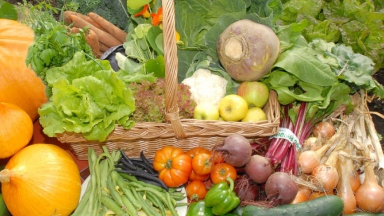 'Grow your own' fruit and veg guides launched by Teagasc