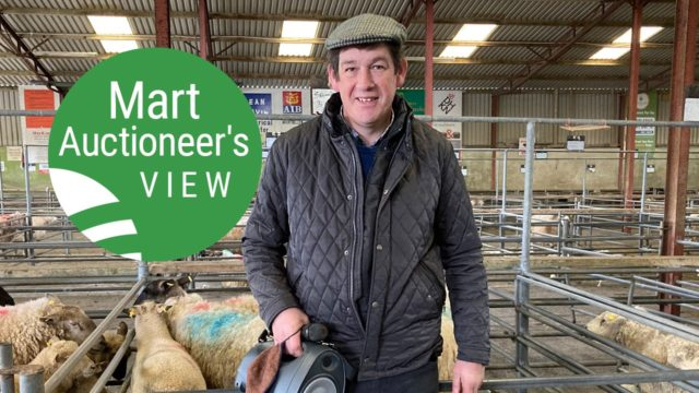 'Top prices for hoggets were generally for ewe hoggets with breeding potential'