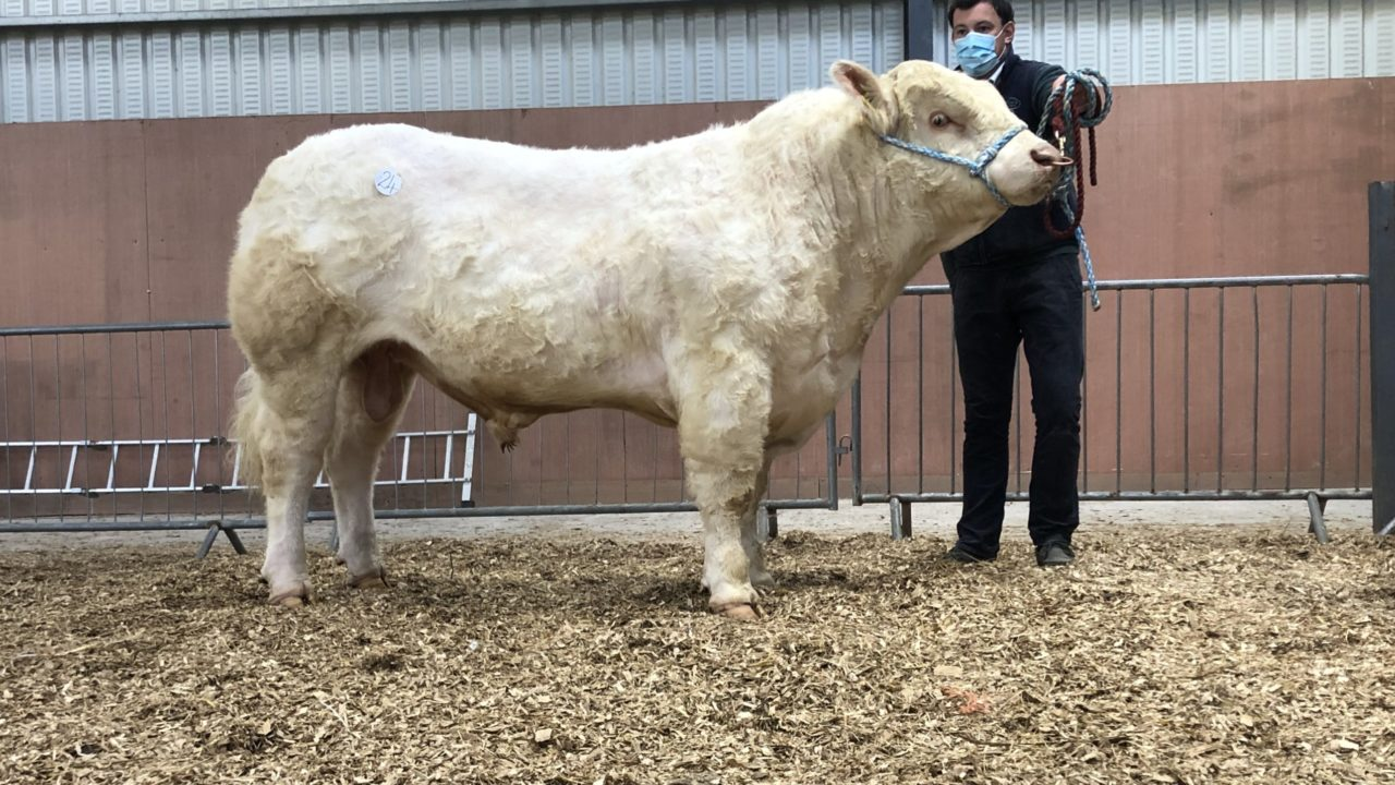 Multi-breed pedigree sale topped at €4,800 in Carrick-on-Shannon